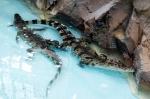함평 양서파충류생태공원,…