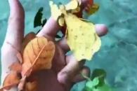 나뭇잎 닮은 벌레의 정체는?