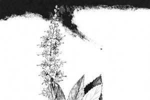 [그 책속 이미지] '계절의 알람시계' 야생화 연정