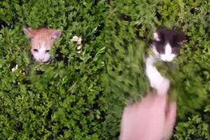 [별별영상] 주인과 숨바꼭질하는 새끼 고양이들