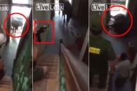 [팝영상] 베트남 주택에 침입한 황소, 결국엔…