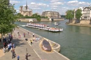 파리 세느 강변에서 발견된 대형 고래, 과연?