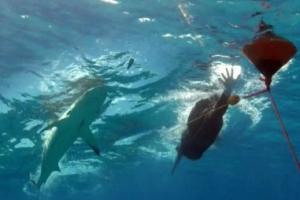 '인간 대표' 펠프스, 특수 수영복 입고도 상어와 맞대결서 패배