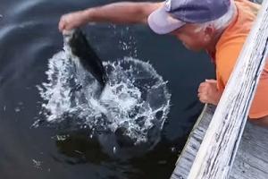 물고기 미끼로 대형 배스 잡는 강태공