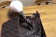 [별별영상] 고양이에게 펀치 맞은 새, 반응이…