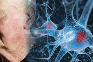 뇌 속에 노화 조절하는 세포가..미국 연구팀 발견, 네이처지 게재