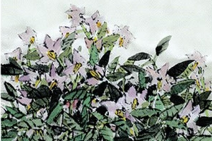 [그림과 詩가 있는 아침] '자주꽃피면 자주감자'/김상철 · 매미가 울면 나무는 절판…