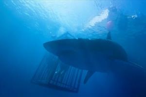 여름 극장가 고래 싸움 속 새우들의 반란