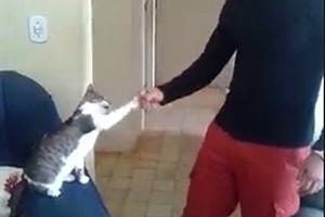 사람처럼 하이파이브하는 고양이 영상 '화제'