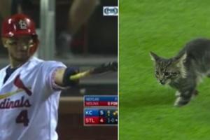 그라운드 난입한 고양이가 몰리나의 그랜드슬램 불렀다?