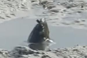 호주 진흙 웅덩이서 포착된 미스터리한 생물