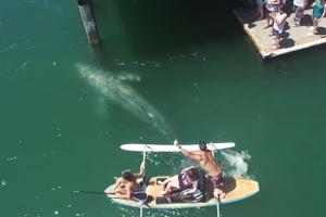 미국 해변서 포착된 새끼 귀신고래