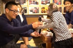 원숭이 웨이터가 물수건에 맥주까지…일본 선술집 '카야부키야'