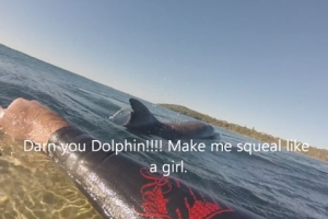 돌고래 지느러미, 상어로 오인해 깜짝 놀란 호주 서퍼