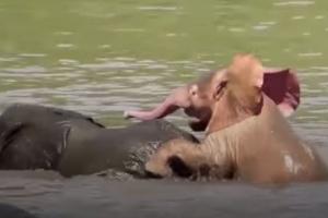 남아프리카공화국서 포착된 핑크 코끼리