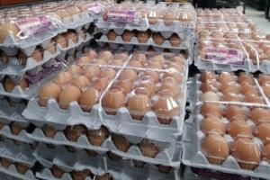 살충제 계란, 국내에 얼마나 유통됐나…이미 상당량 소진 가능성