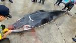 그물에 걸려 죽은 밍크고래…