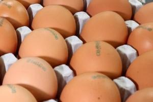오늘 국회 복지위 업무보고…정부에 '살충제 계란' 대책 질의