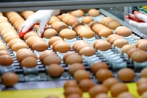 달걀 괜찮다지만…못 믿는 소비자