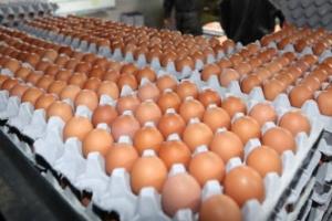"""살충제 계란 파문 속에도…티몬, 계란판매 재개 """"검사결과 이상 없다"""""""