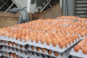 충남 천안, 전남 나주, 전북 순창서도 살충제 계란…전국 7곳으로 늘어