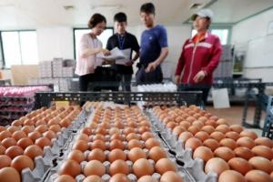 친환경 농가 60곳에서 '살충제 계란' 추가 발견