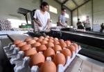 반출 적합 판정 받은 계란…
