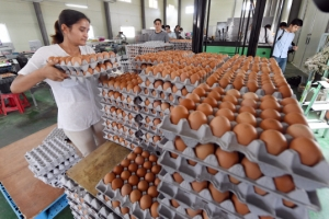 [서울포토] 반출 적합 판정받은 계란 선별작업