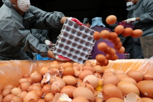 """살충제 달걀 파문…""""09지현·08신선농장·11시온·13정화 계란도 먹지 마세요"""""""
