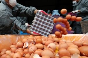 살충제 계란 파문…농식품부, 공장식 축산 규제 안하나 못하나