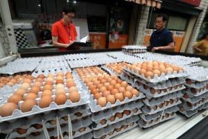 피프로닐·비펜트린 이어 '에톡사졸' 살충제 계란 확인…대전서 검출