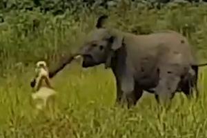 [별별영상] '이거 놔!' 위풍당당 코끼리의 생존기