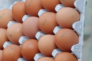 """식약처 """"살충제 계란, 인체에 해 끼칠 정도의 독성 없어"""""""