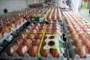 식약처, 내일 '살충제 계란' 인체 위해성 평가결과 발표