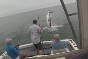 낚시꾼이 잡은 물고기 강탈하는 백상아리