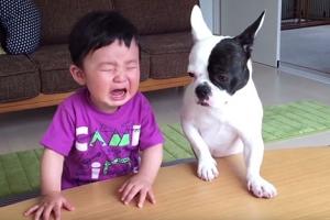 아이 과자 먹어치운 반려견, 아이가 울자 보인 반응?