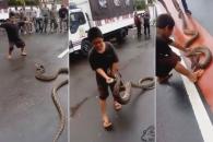 3m 비단뱀, 자유자재로 갖고 노는 어린 소년