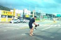 차에 치어 도로 위 숨진 강아지 수습한 운전자의 선행