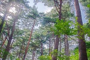 국유림을 산림관광 명소로 활용