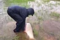 허리케인 하비로 길 잃은 대어 구조해주는 남성들