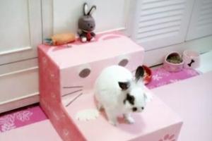 [김유민의 노견일기] 유방암 판정…토미의 눈은 '위로'였다