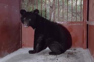 이번엔 잘 지내렴…지리산 반달가슴곰 세 번째 방사