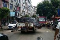 포획돼 팔려가는 멸종위기종 고래상어