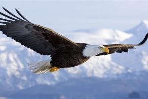 [남순건의 과학의 눈] 왜 새처럼 깃털 덮인 비행기는 없을까