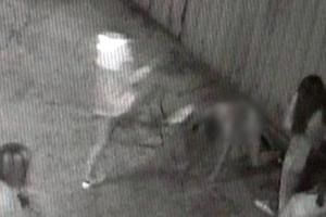 """임광호 판사, 부산 여중생 폭행 가해자들 꾸짖어…""""개·돼지도 이렇게 안 때려"""""""
