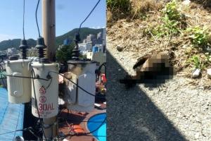 승강기 갇힌 17명 구조…'까마귀' 때문에 부산 해운대구 2000가구 정전