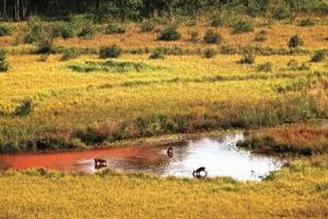"""[우리 이웃 접경지역 : 생태 환경과 발전 방안] """"멸종 위기종 천국 DMZ…생태계 활용…"""