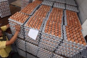 """살충제 공포증 여전… """"달걀 한 판 500원"""" 농가 줄폐업 위기"""
