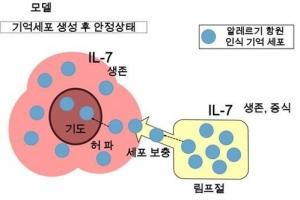 """알레르기 만성화 이유 찾았다…""""새 알레르기 치료법 개발 적용"""""""