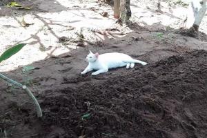 무덤 곁 지키는 흰 고양이, 무슨 사연이